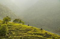 El plan climático nacional mejorado de Colombia, o NDC, incluye el compromiso de abordar las emisiones terrestres de gases de efecto invernadero relacionadas con la deforestación y la agricultura. Foto de James Anderson / WRI.